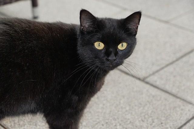 cat-superstitions